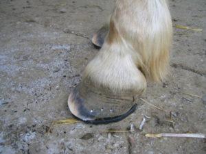 Vernachlässigte Hufe beim Pferd